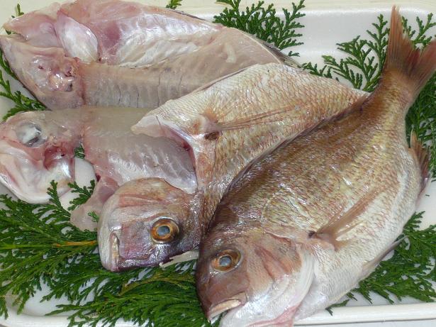 五つ星ひょうご選定商品 明石産 天然鯛のヒラキ  干物 天日干し 6枚~8枚入り