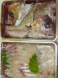 たい 鯛 タイ