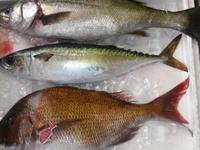 さば 鯖 サバ お魚 セット