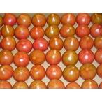 tomato トマト とまと